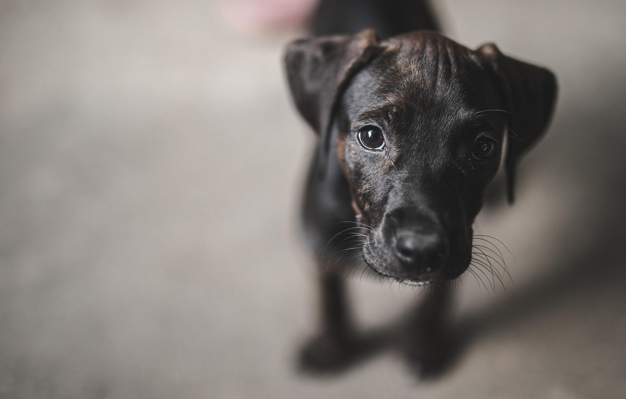 Home | Kids Hurting Animals | PETA